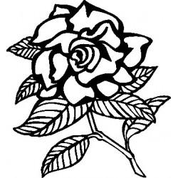 Blume 41