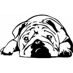 Autoaufkleber: englische Bulldogge Aufkleber englische Bulldogge Aufkleber