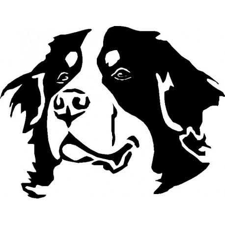 Black And White Bernese Mountain Dog